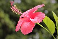 大自然花朵图片