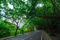 红花湖景区的小路