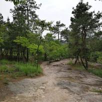 溧水无想山森林公园