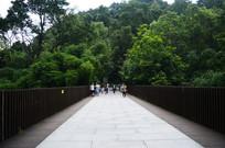 通往森林里的石板路