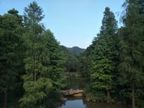 树木与河流