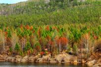 彩色树林风景