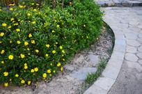 公园石板小路和草花