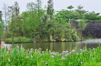 湖泊湿地花卉风景图片