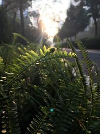 大自然的绿植