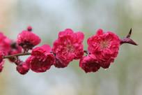 蓝天下的挑花花朵