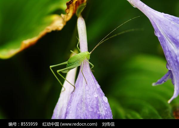 绿色虫图片