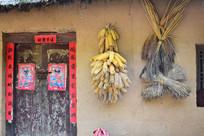 农家院墙上的农作物