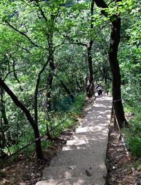 树荫中的登山台阶
