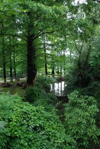 小道边的树野景
