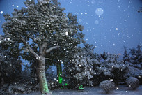 夜晚风雪中的树