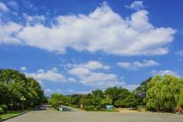 玉佛山双行公路与树木白云