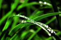 草叶上的晶莹水珠