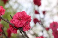 花儿朵朵开
