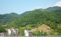 绿色植物覆盖的山岭