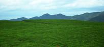 山岭上的茶叶园