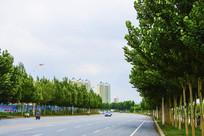 公路与树木