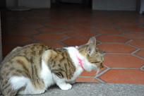 猫趴着的侧面