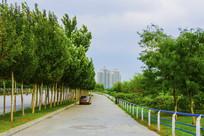 人行路与树木