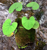水中的绿色植物
