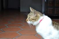 一只猫的侧面