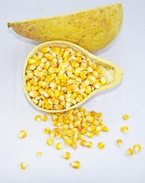 玉米籽高清特写图