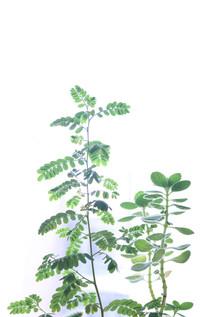白底植物背景