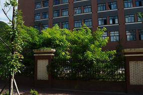 贵州建校围墙上的绿色植物