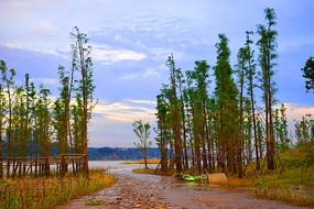 蓝天晚霞中的湘江河绿树林
