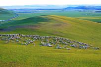 绿色牧场羊群