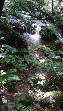 树荫中的河道景观