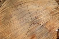 树桩纹理背景图