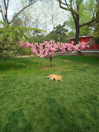 春天园林中的一只小猫咪