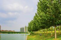 河水树木与住宅建筑