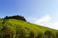 远望蓝天下的绿色山坡