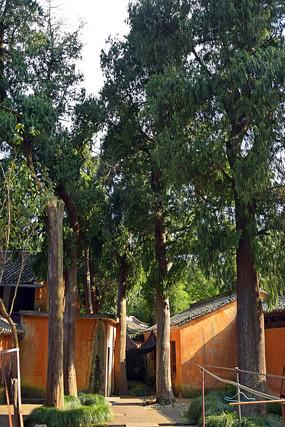 低矮的瓦房和高大的树木