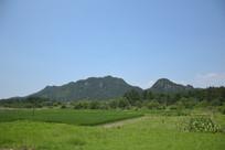 近处的稻田和远处的山岭