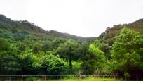 绿意葱葱的山岭