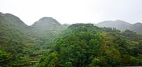 山岭上的绿色树林