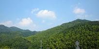 山岭上的绿色竹林