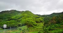 山岭上的竹林和农田