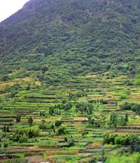 山坡上的庄稼地