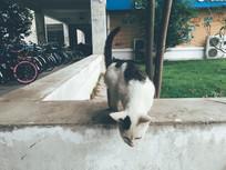 俯身偷看的小野猫