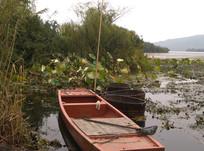 荷花塘里的小渔船
