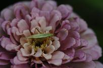 花上的昆虫