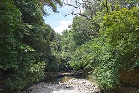 绿色大树掩映的河道
