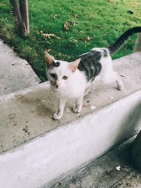 校园里的小野猫之正脸对视