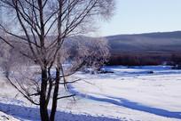 冰河冰雪树木雾凇