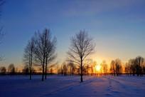 黄昏时分的雪原树林