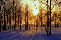 暮色雪原之树